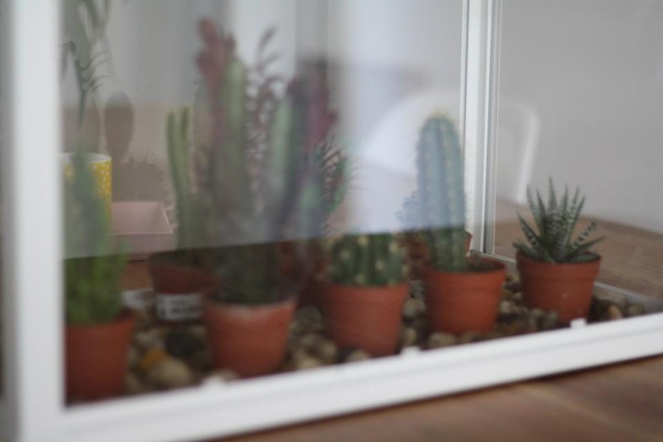 Sukkulenten Kakteen Dekoration Interior